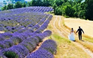 Свадьба в стиле прованс — оформление, платье, букет, декор, цвета