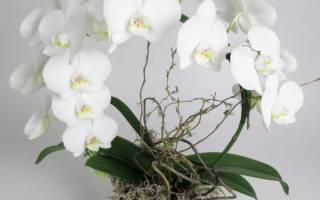 Свадебный букет из орхидей — идеи и мастер — класс